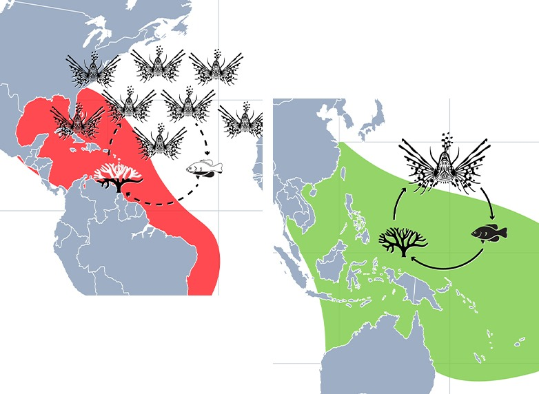 Comparison native habitat and invaded territory