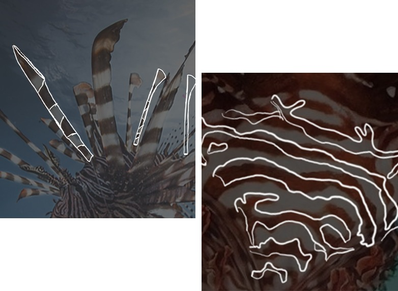 Referencing to the shape and pattern of Lionfish